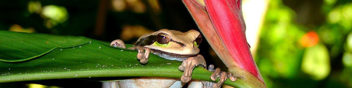 hm_header_frog1a